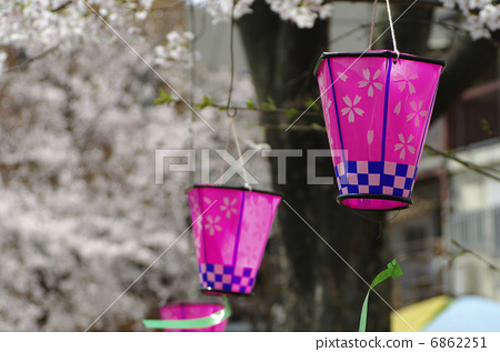 樱花 纸做的灯或灯笼 樱桃树