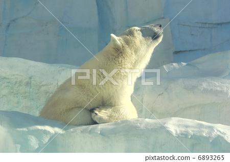 图库照片: 北极熊 动物园 熊