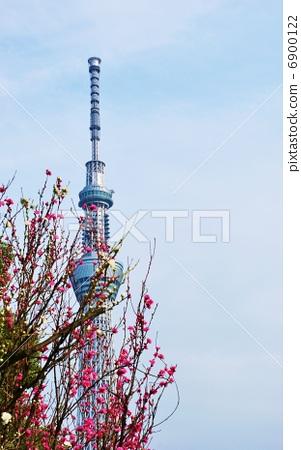 图库照片: 东京的风景·梅花的天空树·垂直位置