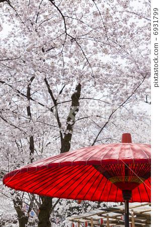 樱花 日本伞 樱桃树