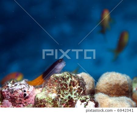 壁纸 动物 海底 海底世界 海洋馆 水族馆 鱼 鱼类 450_372