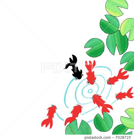 金鱼 荷花 水彩画