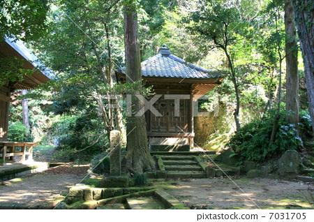 绿色 树木 楼梯-图片素材 [7031705] - pixta