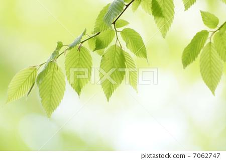 什么树叶有不同的形状