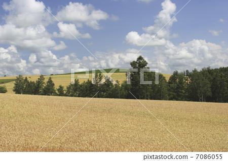 图库照片: 乡村风光 农村场景 夏季图像