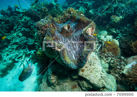 壁纸 海底 海底世界 海洋馆 水族馆 450_317