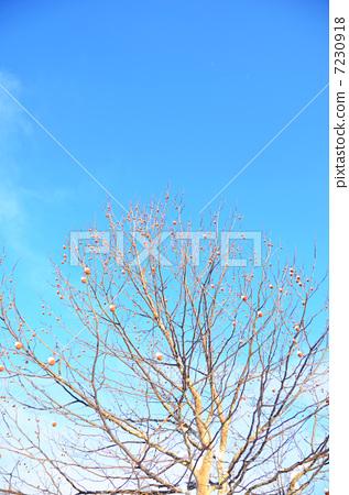 悬铃木植物ps平面素材