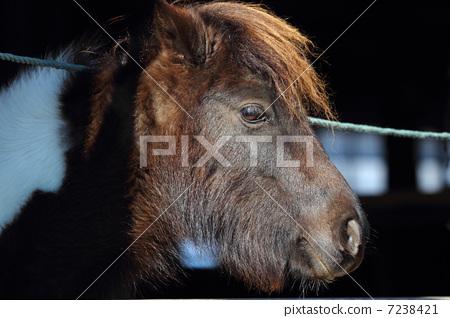 图库照片: 小马 动物 马