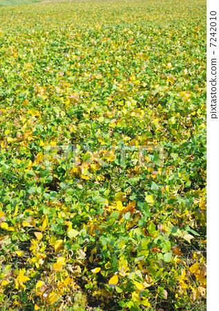 壁纸 成片种植 风景 花 植物 种植基地 桌面 317_450 竖版 竖屏 手机