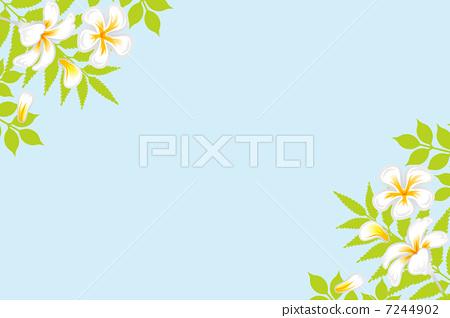 花朵 矢量 花卉