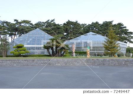 日本敷岛公园 开花 公园