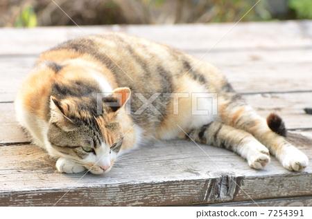 图库照片: 晒太阳 猫 猫咪
