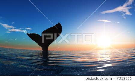 插图素材: 鲸鱼 尾 尾巴