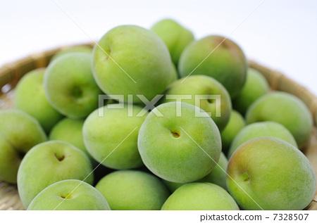 首页 照片 植物_花 梅花 梅花 日本梅子 梅 水果  *pixta限定素材仅在