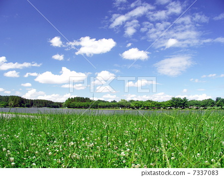 图库照片: 与初夏白三叶草的风景
