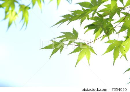 背景 壁纸 风景 绿色 绿叶 树叶 植物 桌面 450_318
