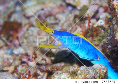 图库照片: 海鳝 海底的 海里