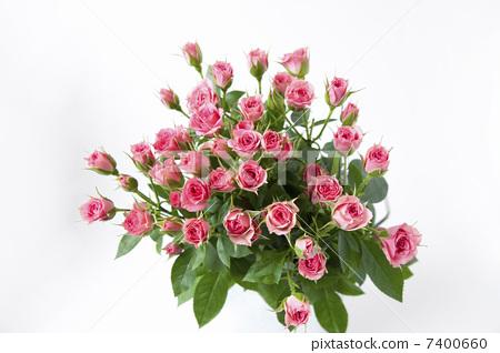 花朵 诗句 一束玫瑰花