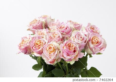 礼物 一束玫瑰花 诗句