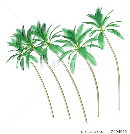 树叶 棕榈叶 椰子