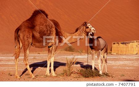 壁纸 动物 马 骑马 450_281