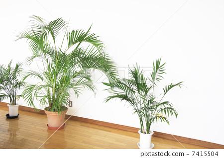 盆栽 室内盆栽 观叶植物