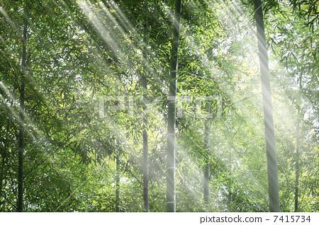 壁纸 风景 森林 桌面 450_318