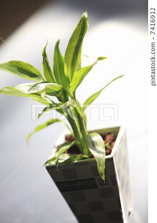室内盆栽 观叶植物 植物人