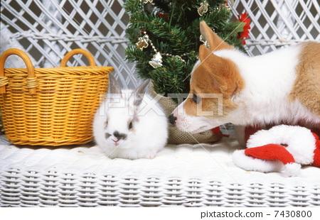 可爱 冬天 动物