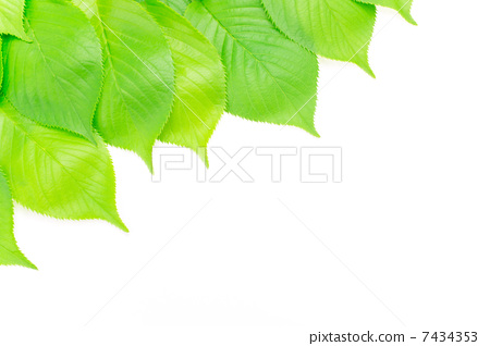 照片: 树叶 银杏叶 边框