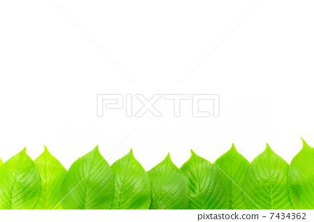 树叶 银杏叶 边框-图片素材