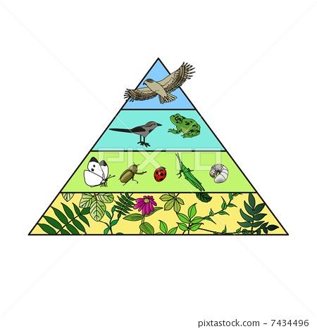 图库插图: 食物链 金字塔 树和植物