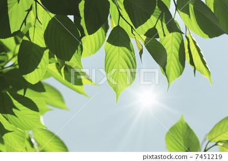 树叶 叶子 鲜绿