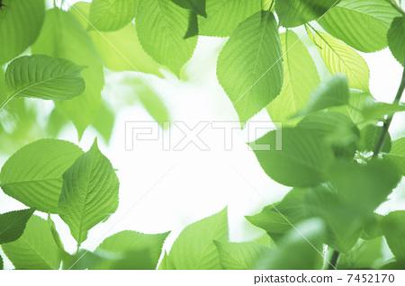 树叶 银杏叶 边框-图片素材 [7452170] - pixta