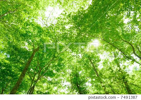 风景_自然 森林_森林 森林 照片 树木 森林 树林 首页 照片 风景_自然