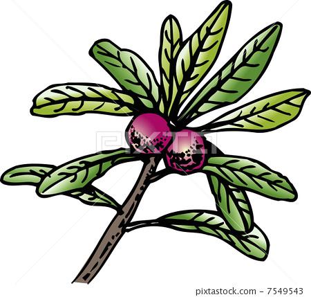 梅手绘植物立面图马克笔