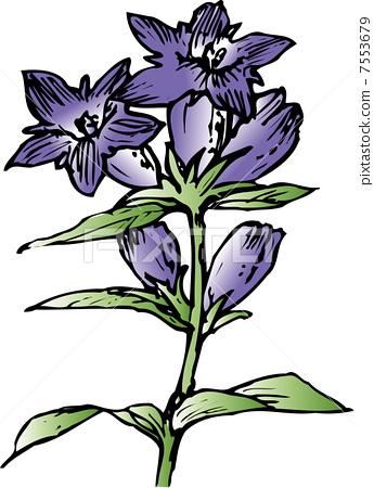 插图素材: 花朵 花卉 花