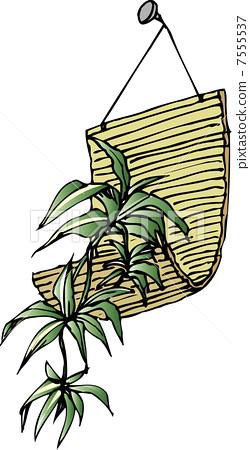 观叶植物 室内盆栽 常春藤