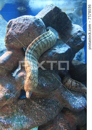 壁纸 海底 海底世界 海洋馆 水族馆 318_450 竖版 竖屏 手机