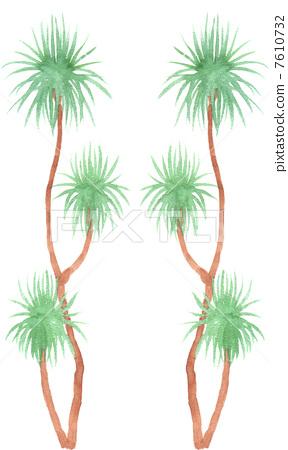 树叶 龙血树属植物 树