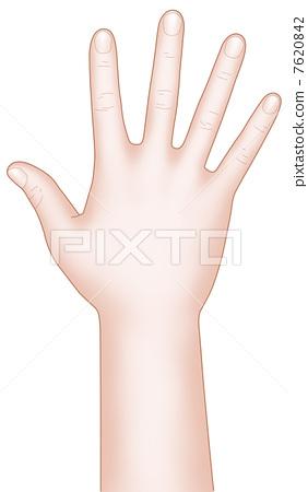 手背 手 stock photos
