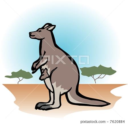 袋鼠 哺乳动物