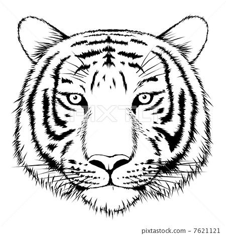 插图素材: 老虎 虎 动物