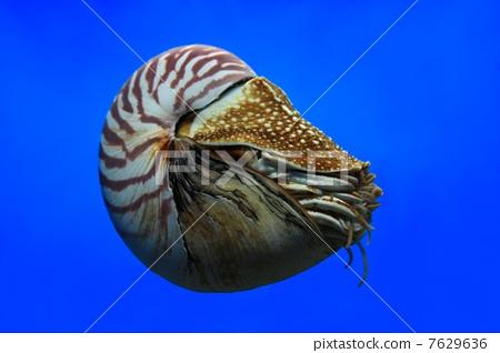 动物 海底 软体 450_318
