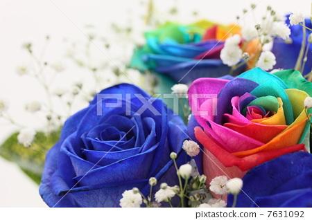花朵 诗句 蓝玫瑰