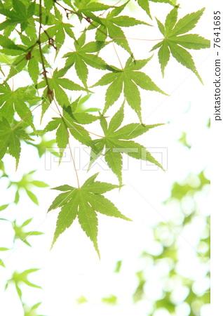 背景 壁纸 绿色 绿叶 树叶 植物 桌面 318_450 竖版 竖屏 手机