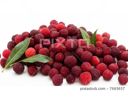 水果 日本月桂树的果实 杨梅