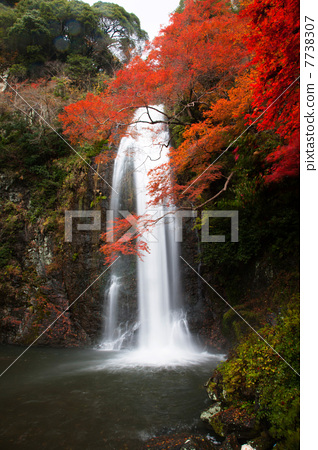 壁纸 风景 旅游 瀑布 山水 桌面 318_450 竖版 竖屏 手机