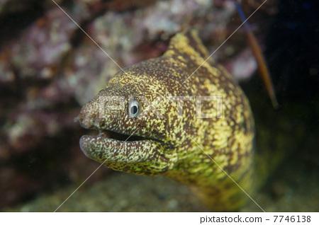 照片: 鱼 海鳝 水下照片
