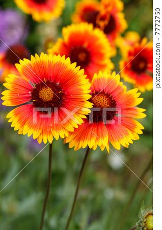 be nice ski goggles  nice flowers 7772750